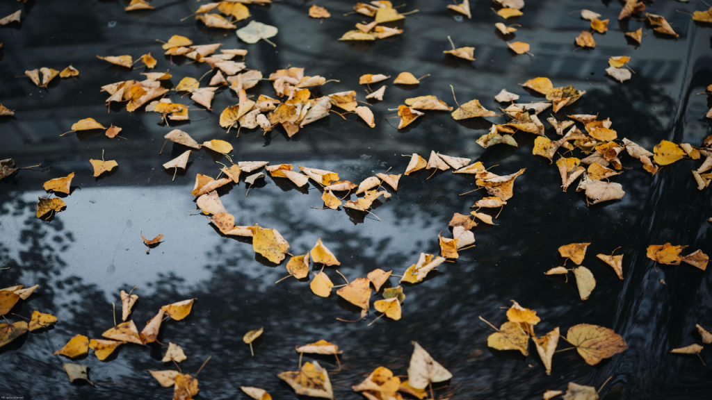 Leaves forming a heart